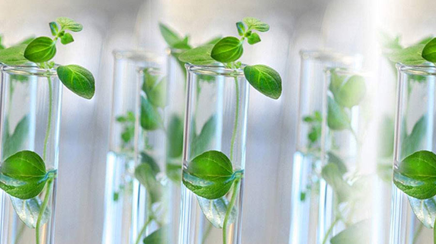 Plant Biology & Plant Biotechnology (Full Time and Part Time)